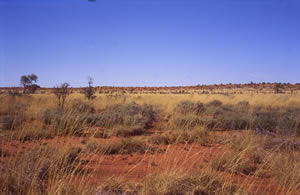 Sandhills near Nyrripi, Northern Territory, Australia, 1996, photographer – Cathy Keys
