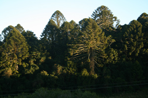 Bunya Mountains, 2011, photographer -  Cathy Keys