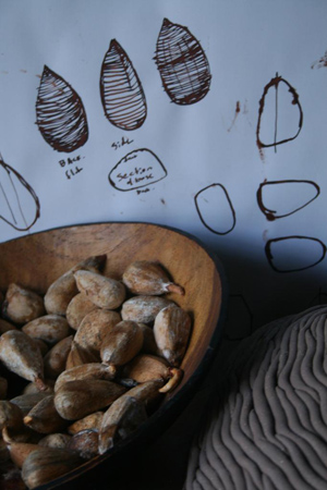 Bunya nuts and design drawings, studio, 2010, photographer -  Cathy Keys