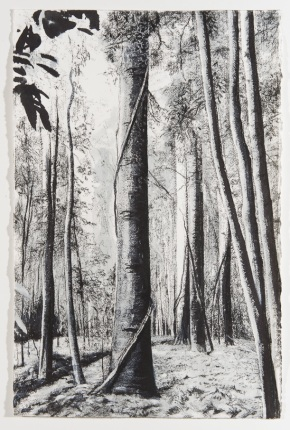 bunya pine study 3, 2012, drawing, ink, charcoal, pastels, 83cm(h)x60cm(w), photographer – Gary Mitchell