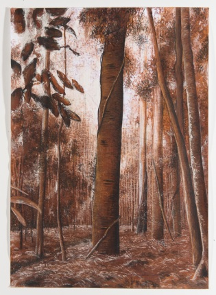 bunya pine study 2, 2012, drawing, ink, charcoal, pastels, 84cm(h)x59cm(w), photographer – Gary Mitchell